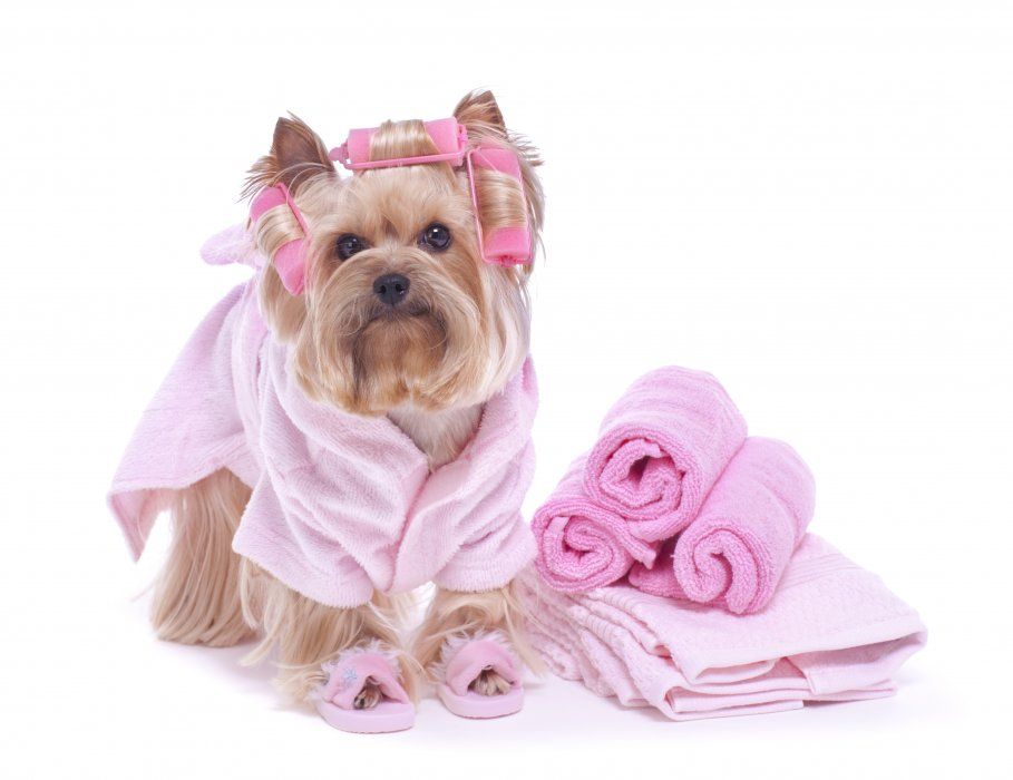professional dog groomers surrey KT11