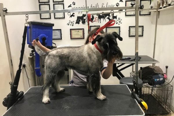 dog grooming salon in Surrey