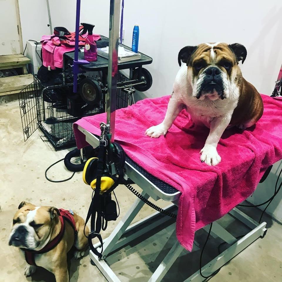 dog grooming salon esher oxshott Surrey