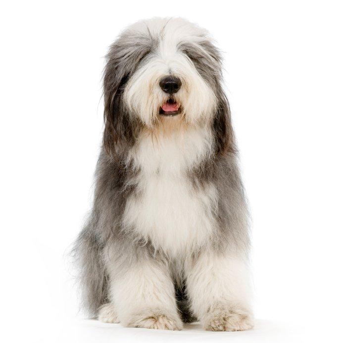 mobile dog grooming surrey KT11