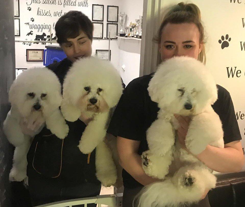 Professional Dog Groomers Cobham Surrey