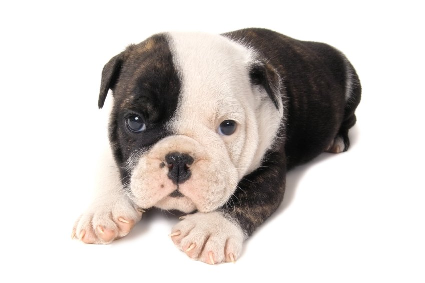 Puppy Grooming Surrey