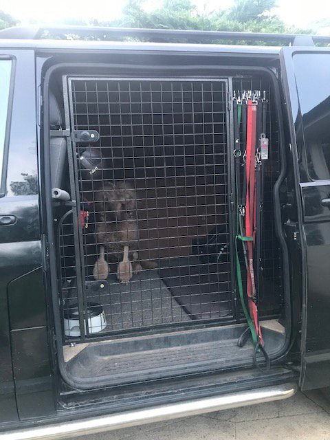 van converted to transport dogs for grooming