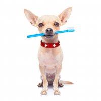 dog teeth cleaning & tartar removal surrey